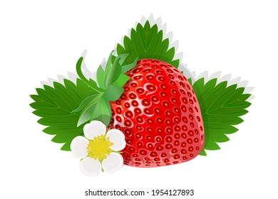 Flower of strawberry illustration for web isolated on white background
