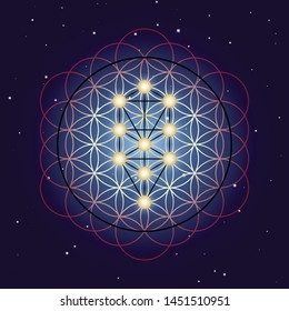 Flower and Tree of Life, sacred geometry on starry sky background.