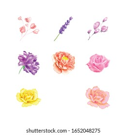 Flower Watercolor Element Include Rose, Lavender, Iris, Carnation, Camellia.