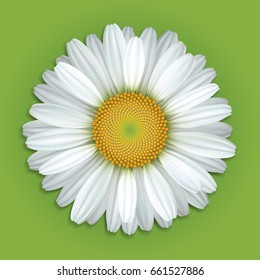 Flower white daisies on a green background.