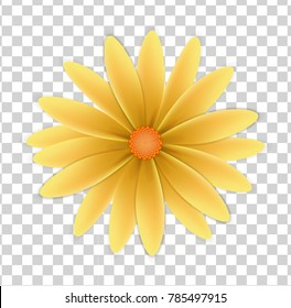 flower with yellow petals and yellow center on a transparent background
