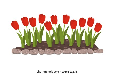 Flowerbed with red flowers. Tulip buds. Spring flowers. Isolated flat vector illustration.