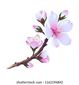 Flowering almond branch. Vector. Isolated.