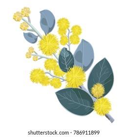 Flowering Australian Wattle Tree Vector Illustration