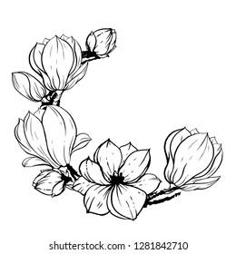 Flowering branch of cherry blossoms, magnolias. Drawn vector illustration, sketch. Set of floral elements, wedding invitation, design