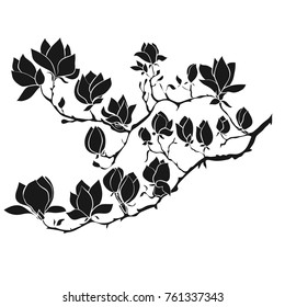Flowering Branch of Magnolia on white background . Hand drawn vector illustration, sketch. Elements for design.