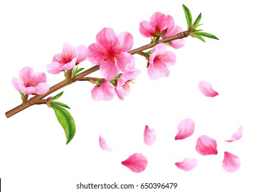 Flowering branch of peach. Vector.