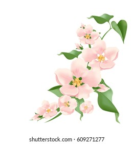 flowering branch. vector pink flowers.