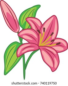Flowering pink lily. Vector