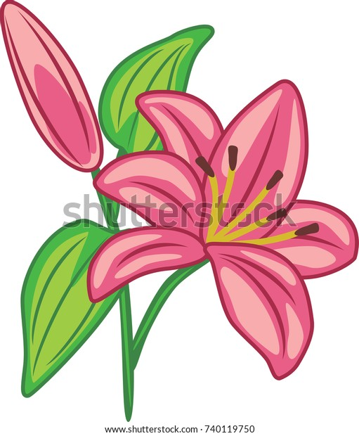 flowering-pink-lily-vector-600w-74011975