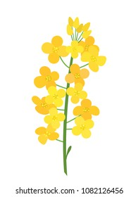 Flowering stalk of yellow rape flowers. Wild field grass. The concept of rapeseed oil or garden. flat vector illustration isolated on white background
