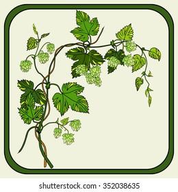 flowering vine hops