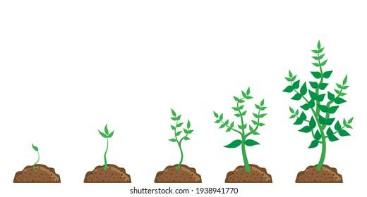 Flowerpot growth process. Vector flat. Stock image. EPS 10.