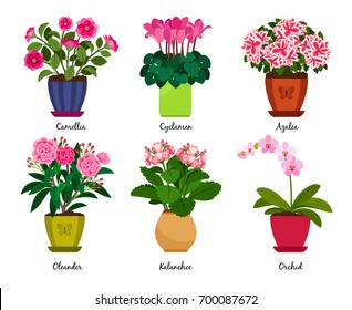 Flowerpots and houseplant flowers in pots. Camellia and cyclamen, azalea and oleander, kalanchoe and orchid vector illustration