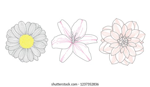flowers chamomile lily dahlia