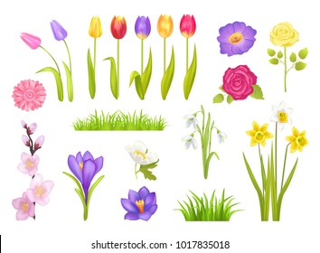Flowers collection, poster with floral elements and grass, snowdrops and tulips, roses and narcissus, gerbera flower set vector illustration isolated on white