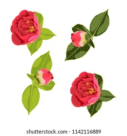 Flowers design set with green leaves and red roses peony flowers couple. Vector illustration four you design.