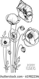 flowers drawing poppy flower vector, illustration and line art