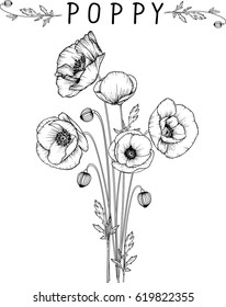 flowers drawing poppy flower vector, illustration and line art