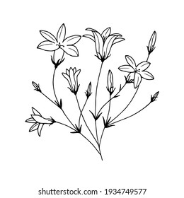 Flowers Field Bells. Vector stock illustration eps10. Outline, hand drawing. Isolate on a white background.