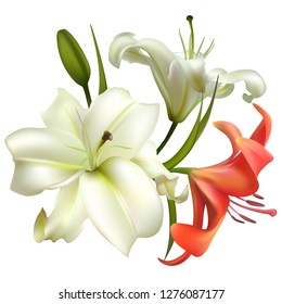 Flowers. Floral background. Lilies. Red. White. Green leaves.