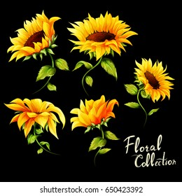 Flowers. Floral collection. Set of five sunflowers isolated on black. Hand drawn. vector - stock.