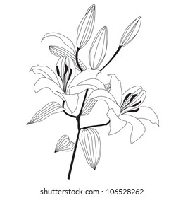 Flowers. Flower branch. White lily bouquet isolated outline