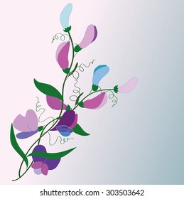flowers and flower of sweet peas, vector in blue and violet colors