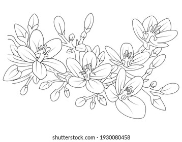flowers graphics vector illustration hand-drawn. flowers drawing and sketch with line-art on white backgrounds. Black and white with line art illustration. vintage retro flowering spring summer.