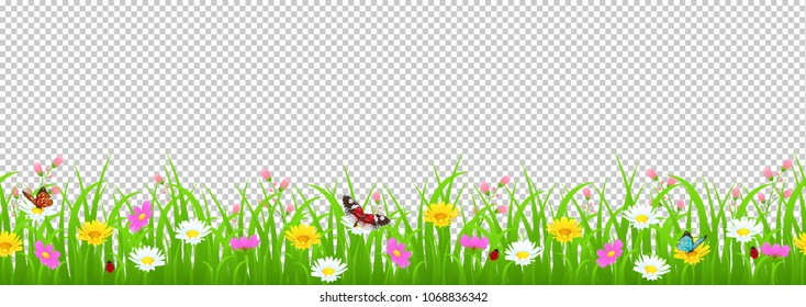 Flowers and grass border, yellow and white chamomile and delicate pink meadow flowers and green grass, butterflies and ladybug on transparent background, vector illustration, card decoration element