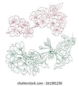 Flowers hand drawn, vector illustration