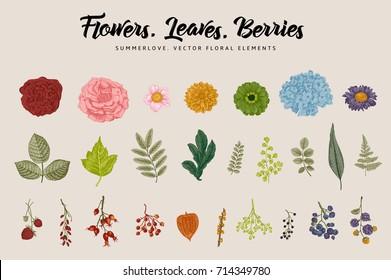 Flowers, leaves, berries set. Botanical vector vintage illustration. Summer Design elements. Colorful.