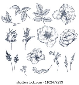 Flowers, leaves and buds of dog rose. Set. Botanical pattern in vintage style. Graphic arts. A beautiful illustration for printing on fabric, clothing, wallpaper, packaging and other surfaces.