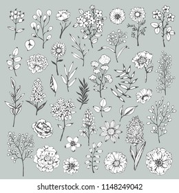 Flowers, leaves, plants, herbs, grass, branches. Hand drawn isolated set