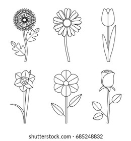 Flowers line drawings. Vector thin illustration of garden flowers.