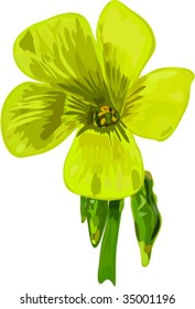 Flowers of on an angle oxalis five petals in the yellow color