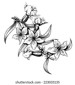 Black and white flowers outline images stock photos vectors flowers outline vector illustration mightylinksfo Gallery