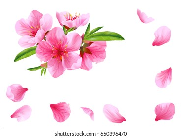 Flowers and petals of peach. Vector.