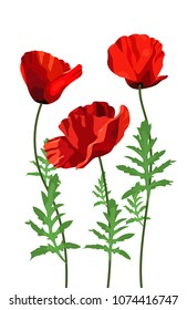 Flowers poppy on a white background, wildflowers, bouquet of flowers, flat design. Vector illustration.