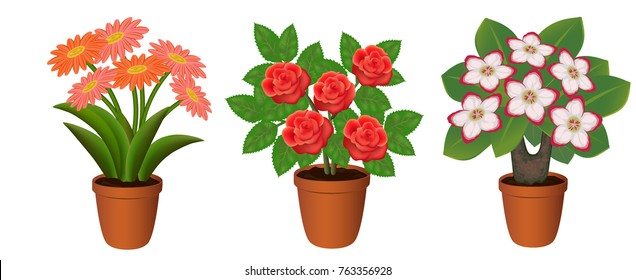 flowers in pot, potted plants, Adenium, rose, Daisy