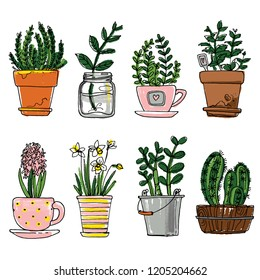 Flowers in pots painted black line on a white background. Vector color drawing lines