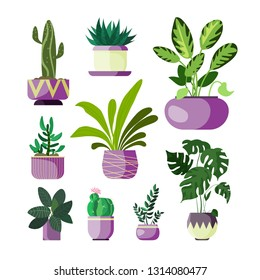 Flowers in pots set. Collection of houseplants. Can be used for topics like decoration, gardening, floriculture