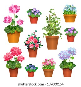 Flowers in pots.  Vector collection