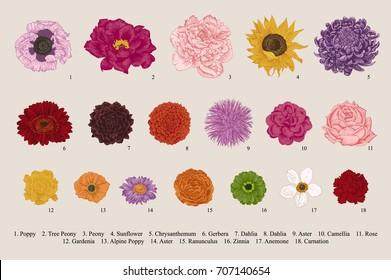 Flowers set. Botanical vector vintage illustration. Design elements. Colorful