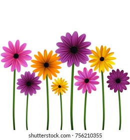 Flowers. Set. Daisies. Floral background. Vector illustration. The stems.