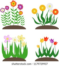 Flowers, a set of flowers on the lawn. Chamomile, tulip, narcissus. Vector illustration of flowers.