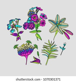 Flowers. A set of separate flowers - lilies, anemones, leaves