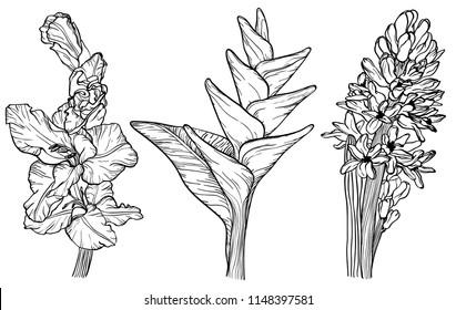 Flowers sketch set gladiolus, hyacinth and bird of paradise flower