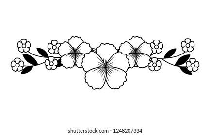 flowers stem botanical on white background