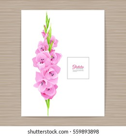 Flowers - Summer background with pink gladiolus. Hand drawn vector illustration.